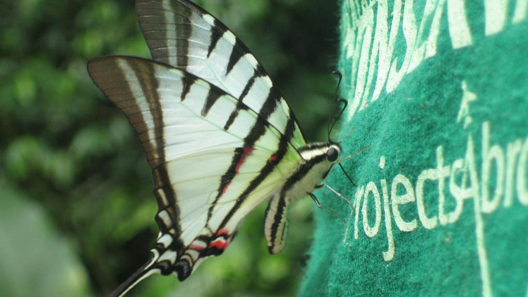 Un papillon se pose sur le logo Projects Abroad au Costa Rica.
